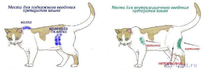 Как коту сделать укол в лапу 774